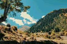 伴着潺潺水声,欣赏西藏夏乌村浓浓秋色