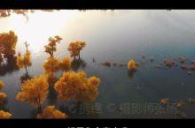 新疆的胡杨林旅拍你会选择什么衣服呢