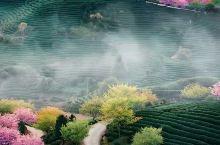 桃花谷里的桃花仙