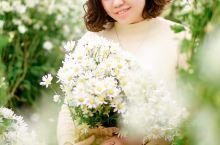 冬天到越南河内拍小白菊攻略