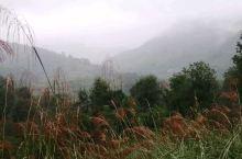 雨中,茶山很美,路却很烂,京驰公司拍《龙州媚》MV真是下血本了。