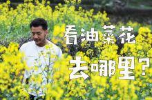 春天去哪看油菜花?