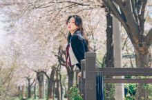 男朋友一学就会的樱花少女拍照指南!