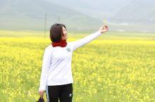 青海湖油菜花已如期开放