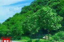 美丽乡村,国家特色小镇——丹东大梨树