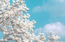 首尔樱花就是 ❤️송파둘