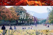 绝美秋景打卡地|南京明孝陵神道