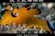 皮卡丘海蛞蝓