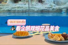 珠海|假期遛娃首选!看企鹅观烟花品美食