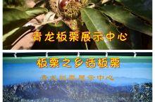 秦皇岛青龙县板栗展示中心,板栗之乡说板栗