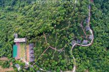 钦州石祖禅茶园