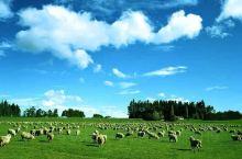 呼伦贝尔大草原旅游
