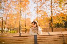 深圳暖黄色的秋天来了深秋最美小树林
