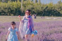 夏日伊犁的底色,就应该是紫色