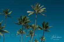 夏威夷的椰子树