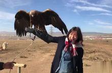 蒙古特勒吉国家公园 荒野中举起秃鹫