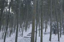 见过莫干山的竹海雪原嘛