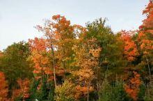 加拿大枫叶季