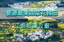 婺源江岭油菜花游览拍摄全攻略