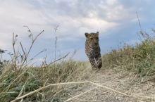 路小露的旅行肯尼亚动物篇
