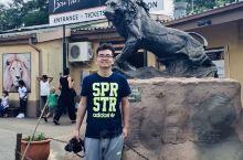 约翰内斯堡·狮子园 Lion Park