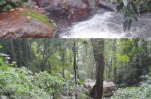 瑞丽莫里热带雨林