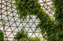 Mount Coot-tha Botanic Gardens 布里斯班植物园 周末、节假日停车位难找