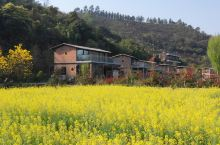 春暖花开,到云座农场观赏油菜花海