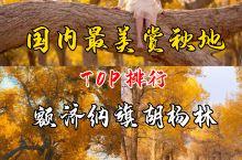额济纳旗胡杨林——国内最美赏秋地TOP