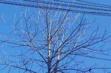 冬天光秃秃的树枝