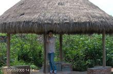 2005茂名植物园