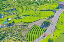 日本版的马丘比丘天空之城岐阜百年天空茶田