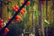 眼中的秋天