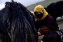 玛沁,三江源生态保护区的高原牧场