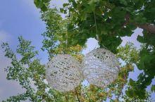 银杏树上的艺术品
