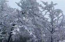 初春雾凇景象
