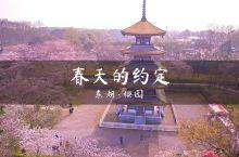 欢迎大家明年再来武汉樱花城