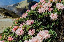 宝岛美丽的仙境花园丨合欢山赏杜鹃