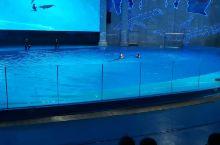 海豚海狮表演