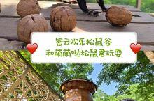 密云欢乐松鼠谷,几百只萌萌哒小松鼠,不插电的儿童游乐场 欢乐松鼠谷是华北地区首家以松鼠为主题的儿童亲