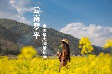 花儿王国|中国最大的油菜花海