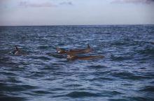 🍊 桑岛海豚湾,很多人选择了在海里和🐬同游,它们性情温和,接受来自人类的拥抱。这是坦桑尼亚唯一允许可