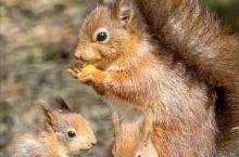 松鼠的一家