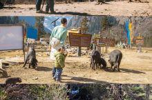 云南最经典的徒步线路带娃一起去简直太虐  千万不要带一岁半的男娃去徒步雨崩村[哭惹R] 因为等他长大