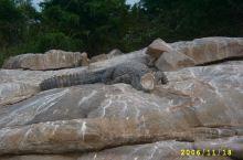 迈索尔的鳄鱼会照相