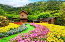 天露山赏花
