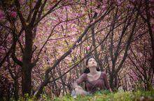 第一次看这么壮观的樱花应该怎么拍?