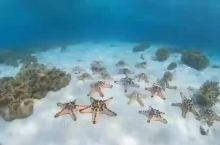 塞班不需要潜水就能看到海星