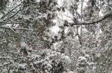 看      雪