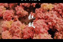 重庆的春天|我从没见过的美!